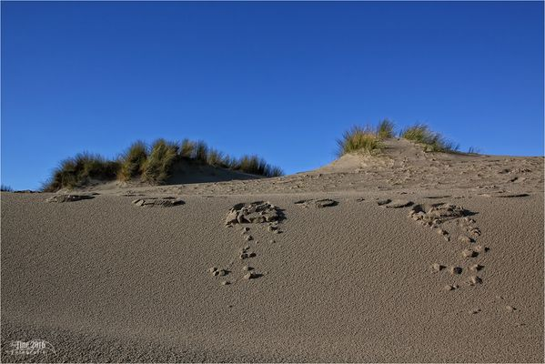 hinter den Dünen