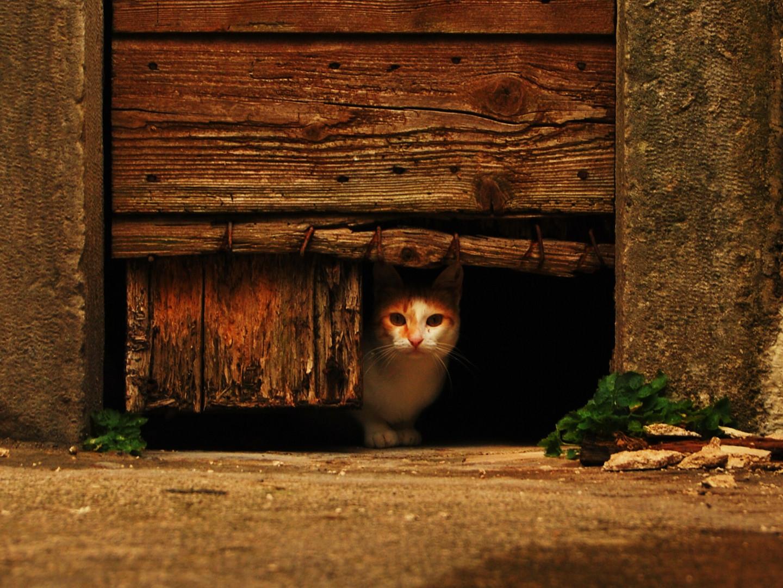 Hinter der Tür..