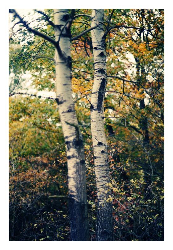 Hinter eines Baumes Rinde...