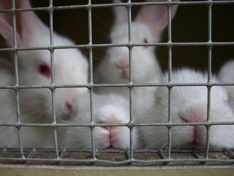 Hinter Gittern, der Hasenknast!