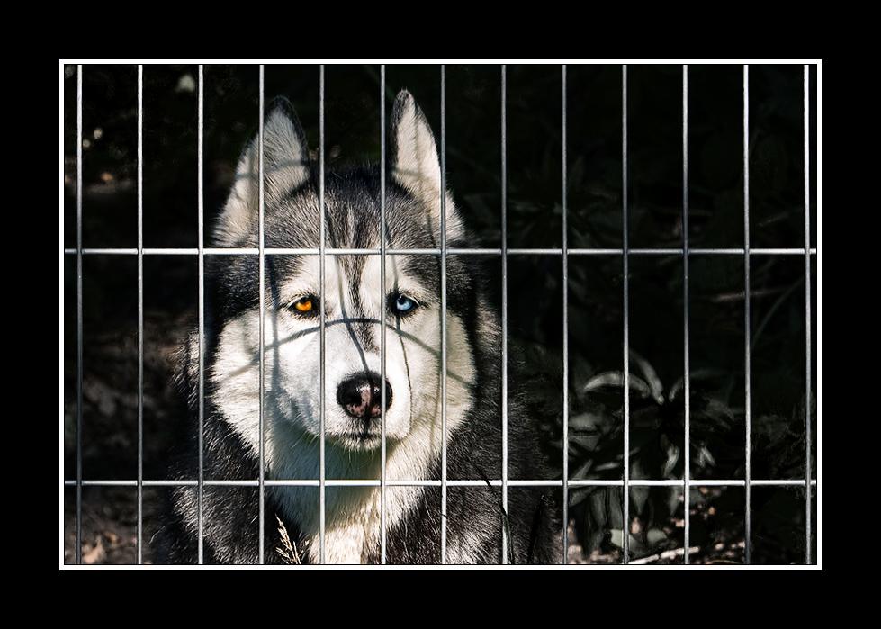 hinter gittern sollte kein hund sein