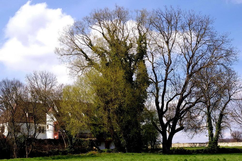 Hinter hohen Bäumen versteckt
