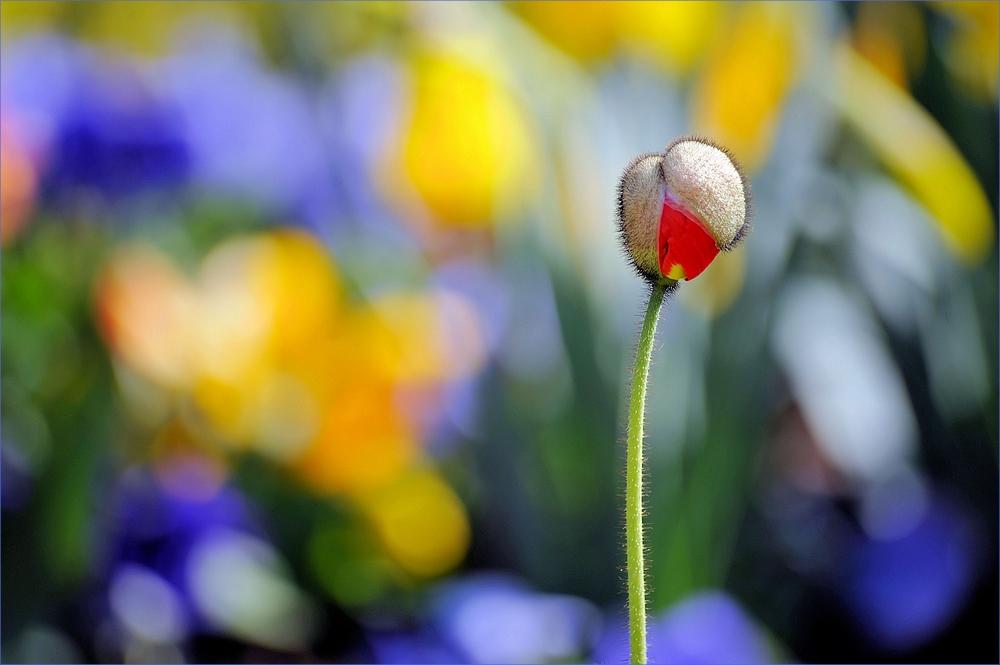 Hinter jedem Winter steckt ein zitternder Frühling....