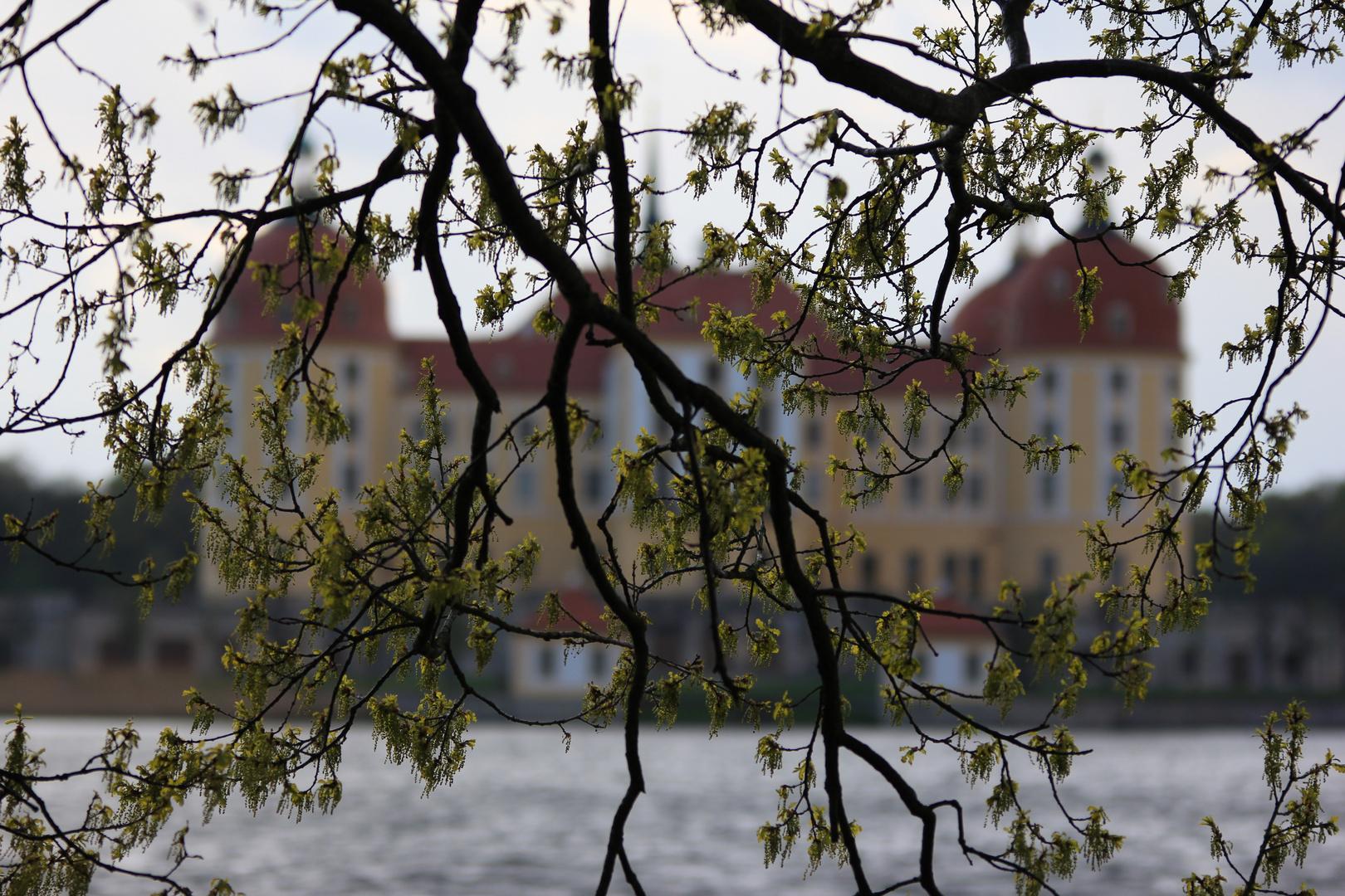Hinter Zweigen