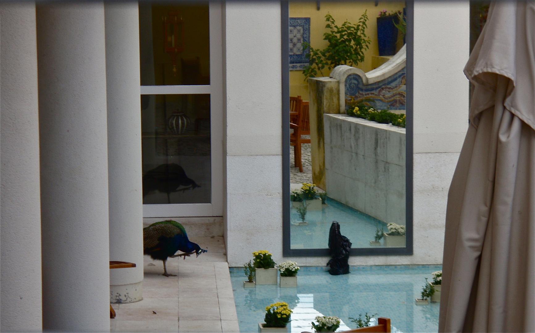 hinterhof  eines kleinen hotels, lissabon 2008
