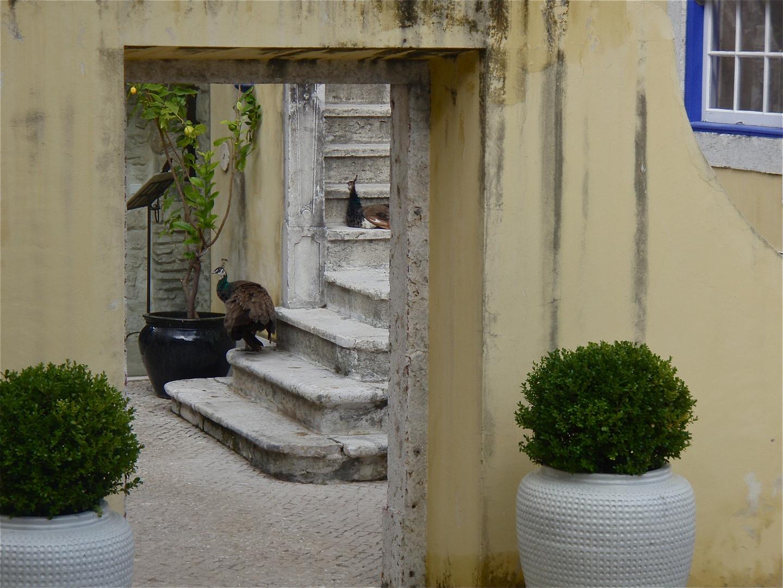 hinterhof, lissabon 2008