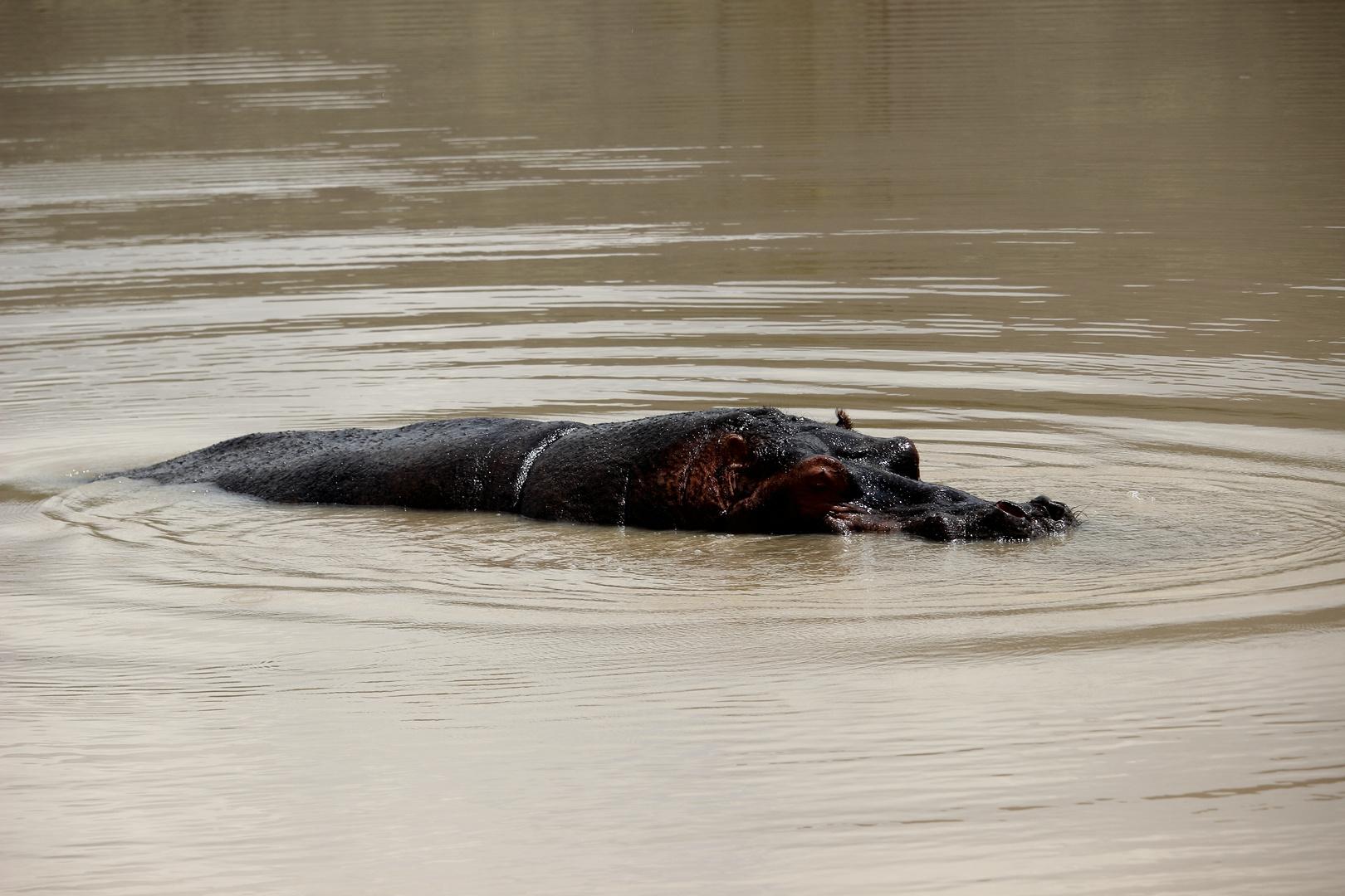 Hippo - auf das Wesentliche reduziert