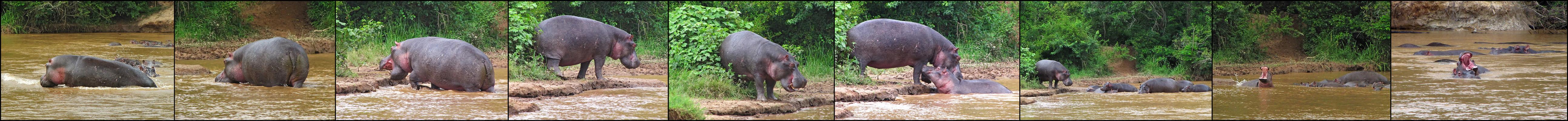 Hippo Paradies
