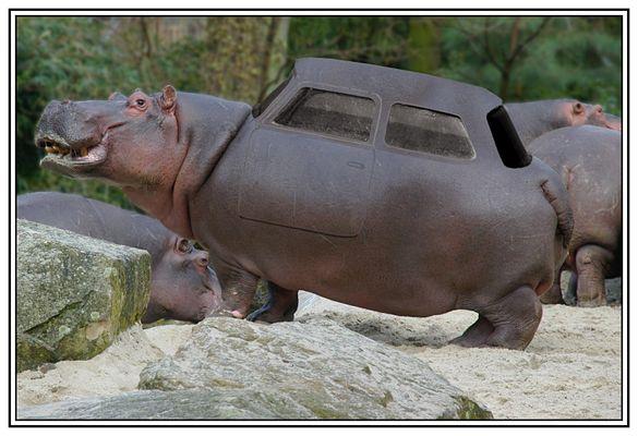 Hippomobil ...