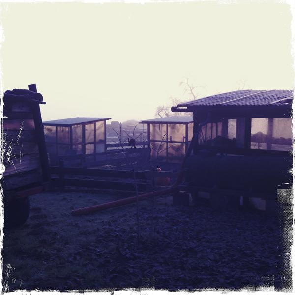 Hipstamatic Wetterbericht Himmighofen -1.5° Nebel -Sonne alles dabei