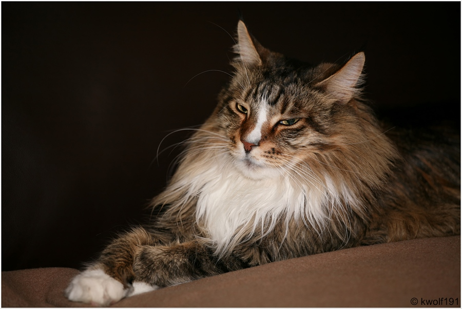 His Royal Highness...