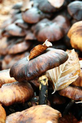 Histoire d'amour entre un champignon et une feuille