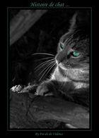 Histoire de chat ...