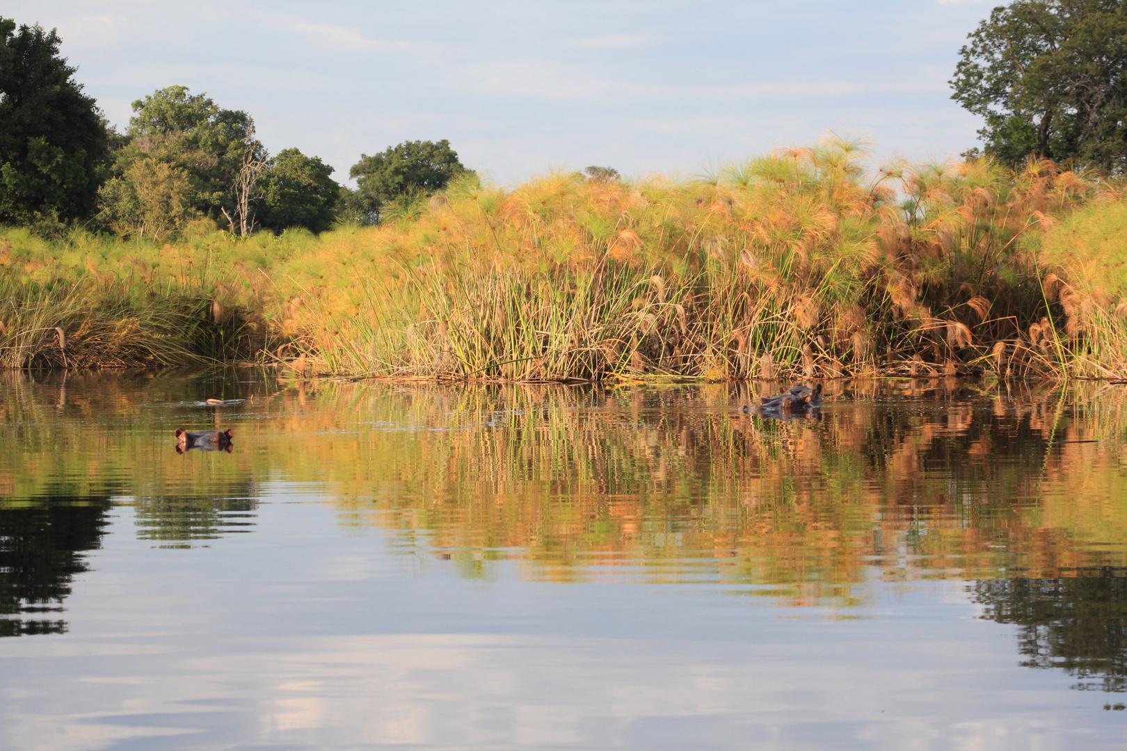 Histoire d'hippos : Soleil levant