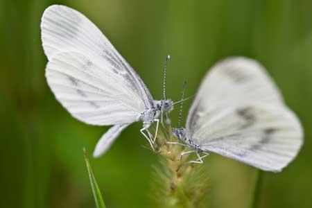 Histoires de papillons