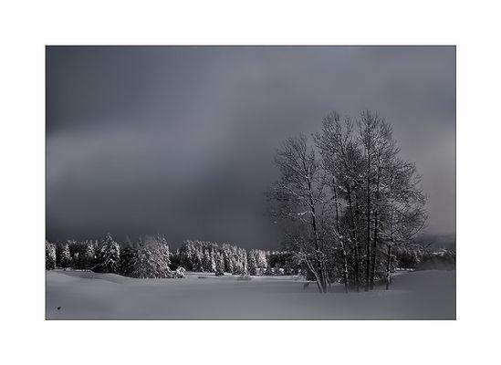 Hiver en blanc et noir