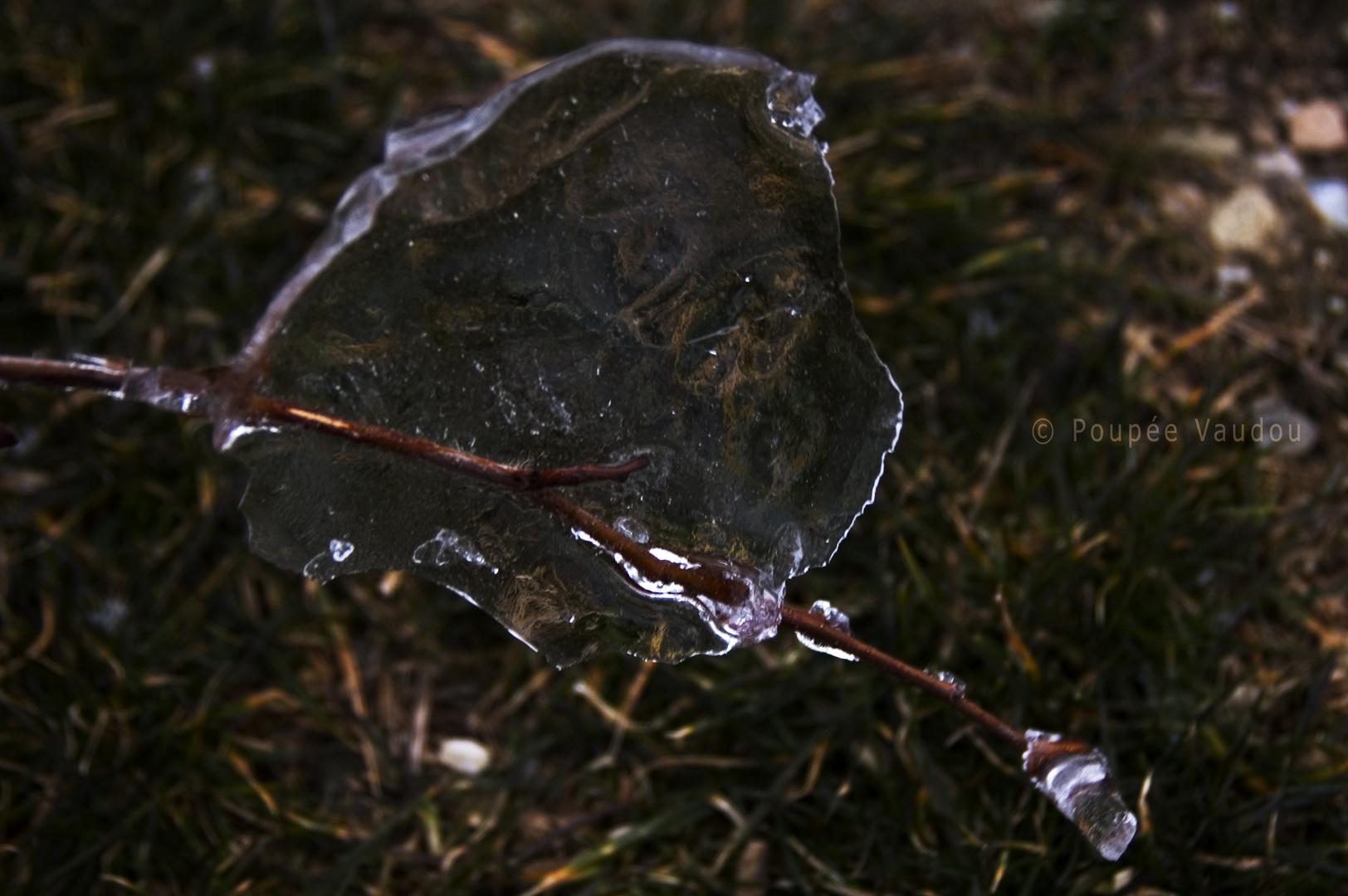 hiver, jeudi 11 février, une tête de loup sans gueule de bois, et pourqoui pas?