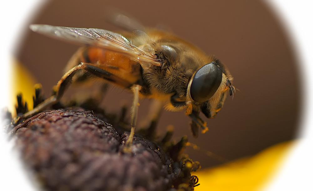hmm lecker nektar....