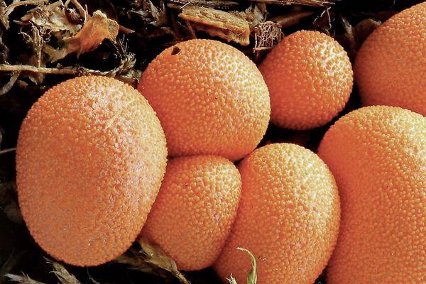 Hmm, leckere Apfelsinen?