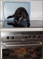 Hmm........... ob sie da wohl was für mich im Ofen hat ???