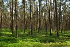 Hmm, Wald?!