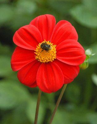 Hmmm.... lecker Blume!