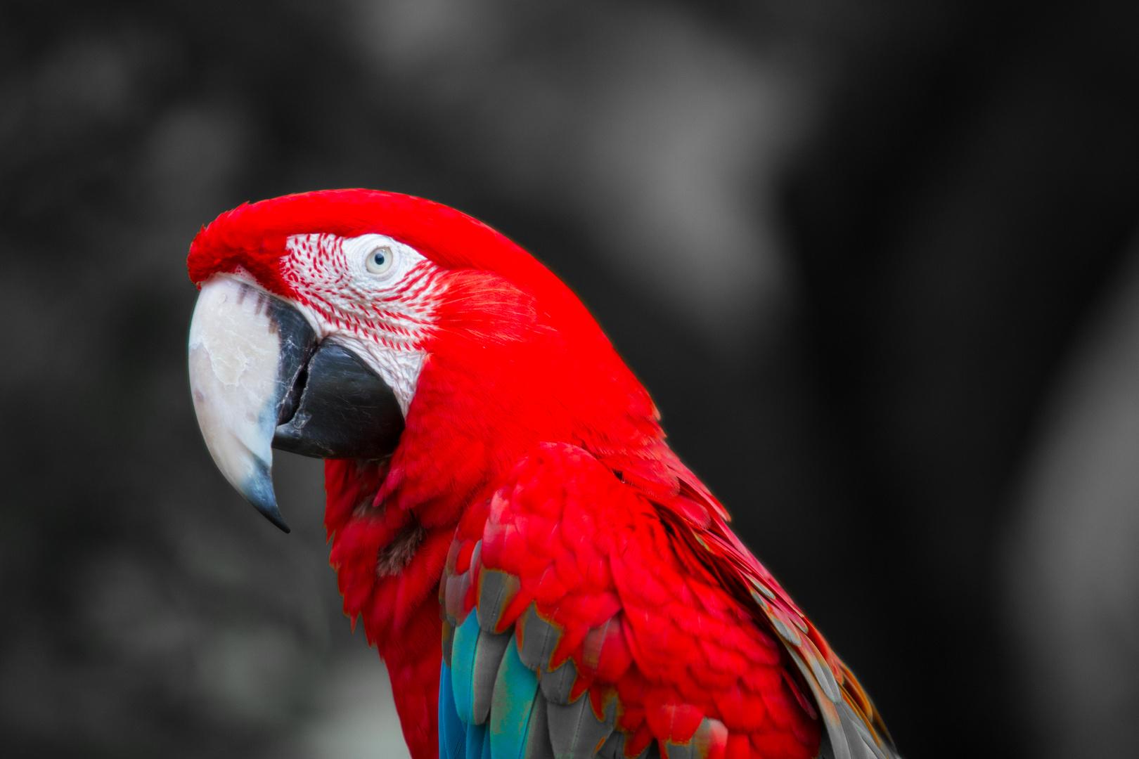 Hmmm...ist halt einfach ein roter Papagei!!!