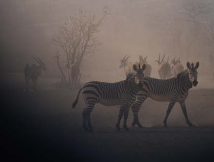 Hobatere Namibia