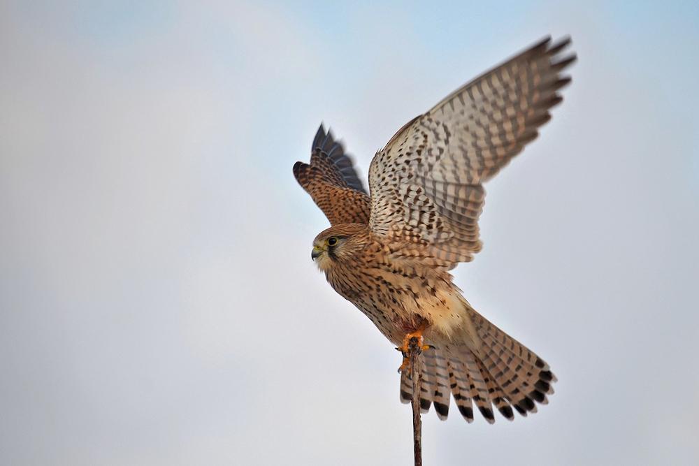 hoch die Flügel..