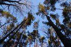 Hoch in den Bäumen