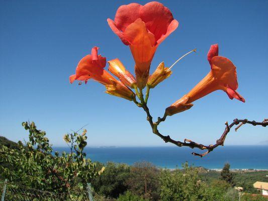 Hoch über Korfu
