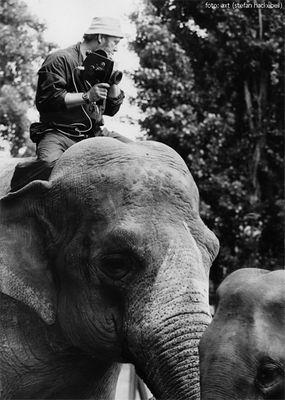 Hoch zu Elefant