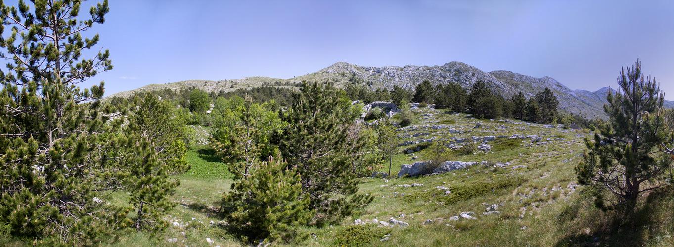 Hochfläche des Biokovo Gebirges mit Schwarzkiefern