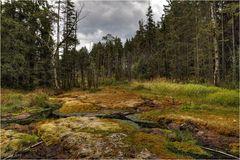 Hochmoor Grünheide