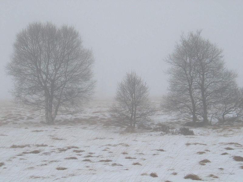 Hochmoor im Januar