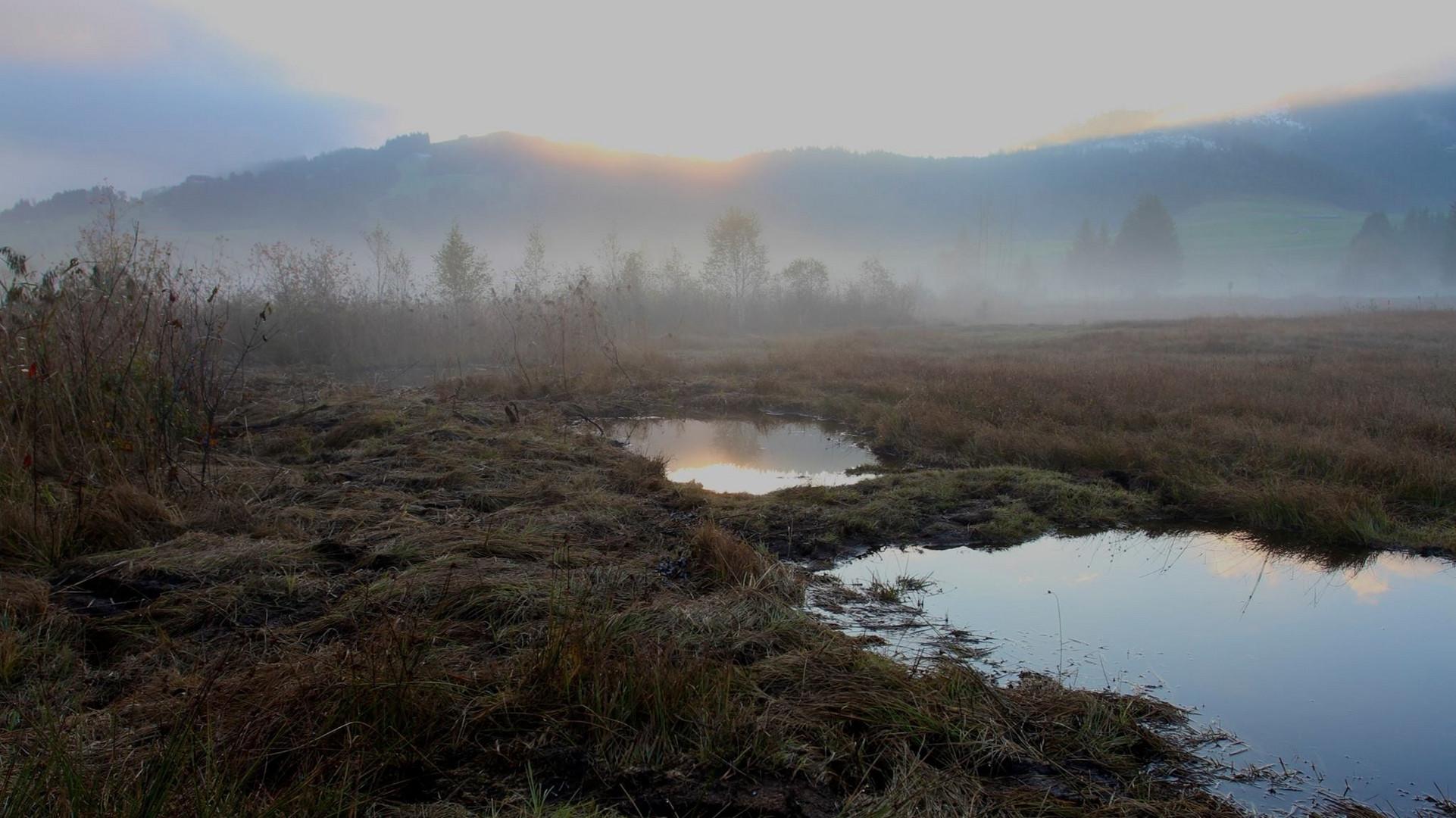 Hochmoor im Morgentau