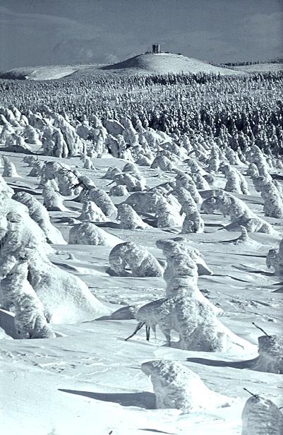 Hochschnee am Schneekopf