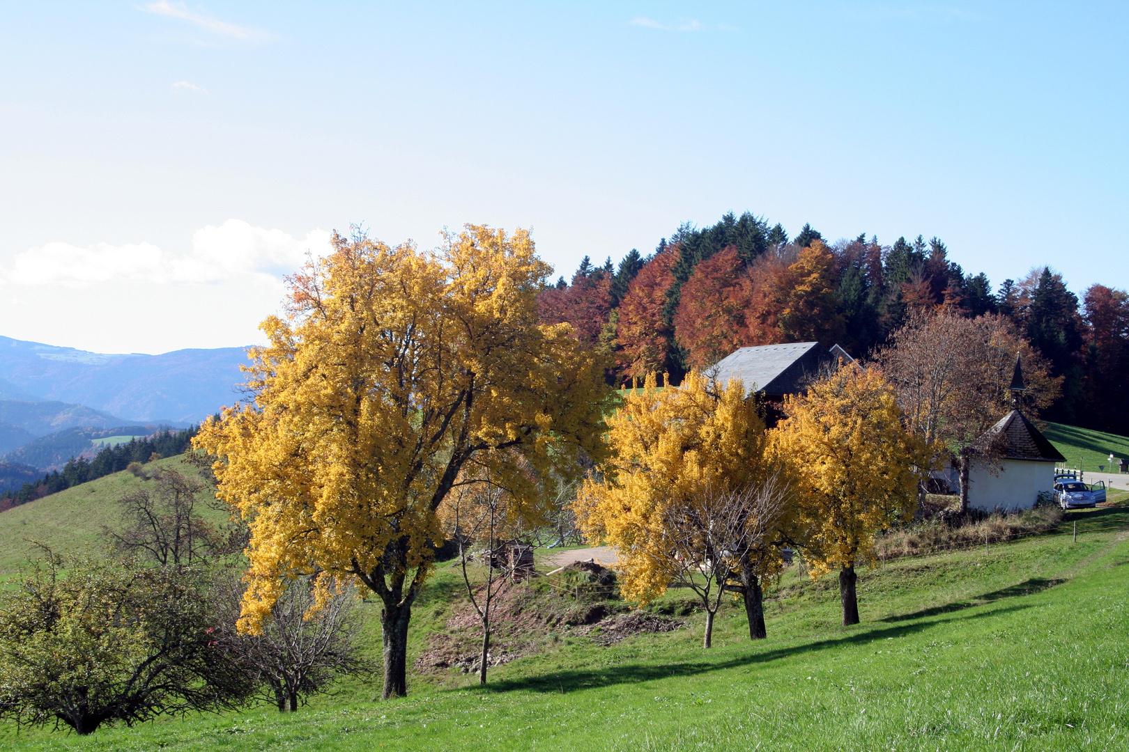 Hochschwarzwald im Spätherbst 2013