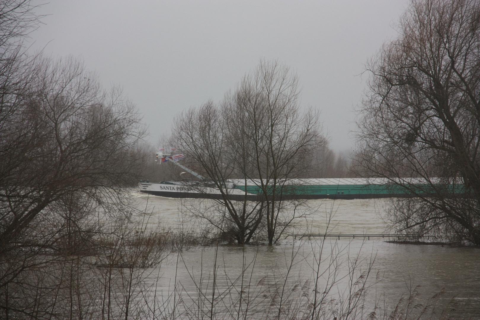 Hochwasser am Rhein 1 ... 4.2.13