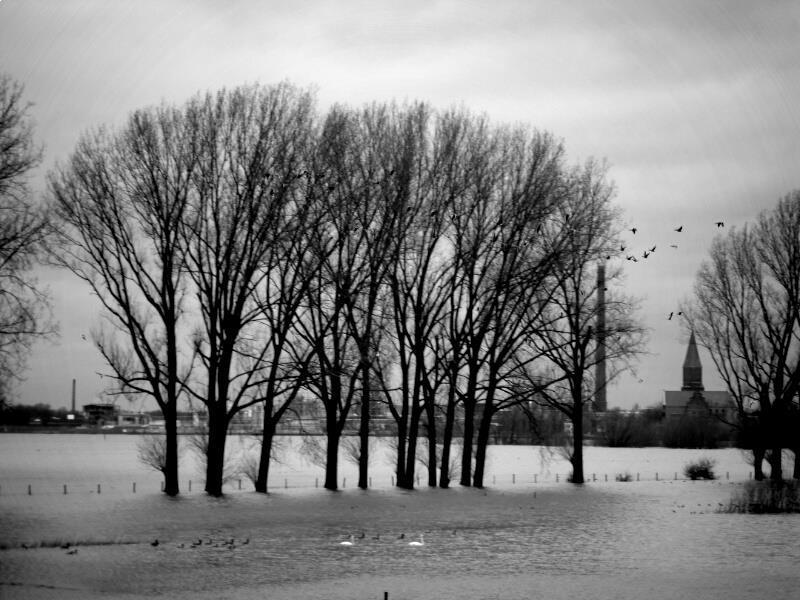 Hochwasser am Rhein Dez. 2012