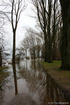 Hochwasser am Rhein in Wesel