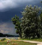 Hochwasser am Rhein- kommt gleich ein Unwetter?