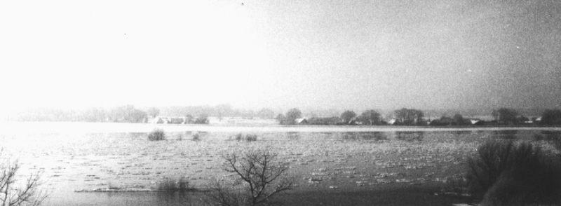 Hochwasser an der Elbe im Gegenlicht