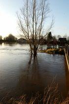 Hochwasser an der Treene