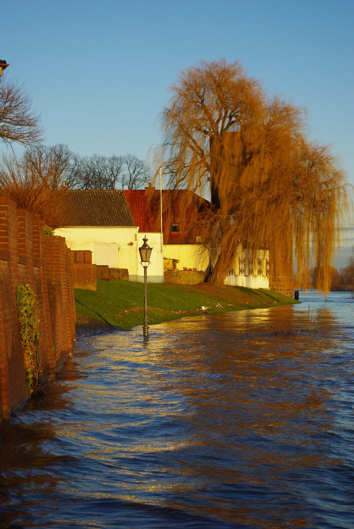 Hochwasser bei Rees