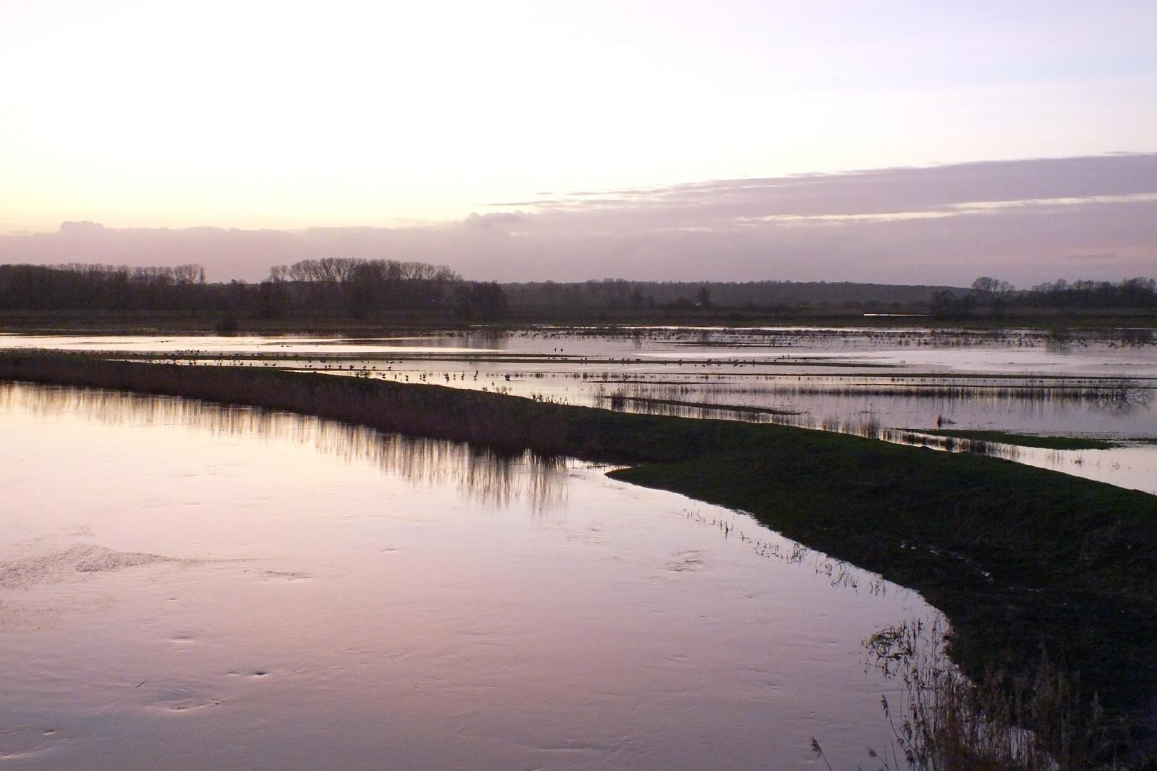 Hochwasser der Stör im Januar 2012