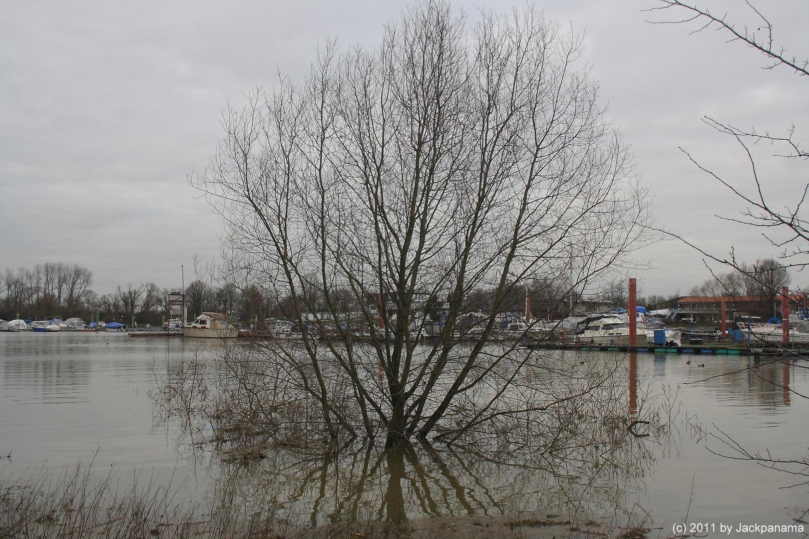 Hochwasser im Weseler Yachthafen