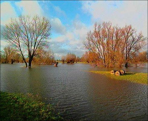 Hochwasser in der Rheinaue