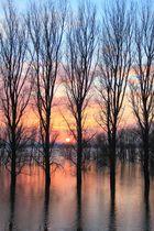 Hochwasseridylle am Niederrhein