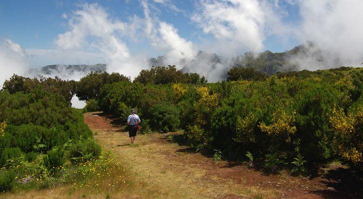 Hochweg in den Bergen Madeiras